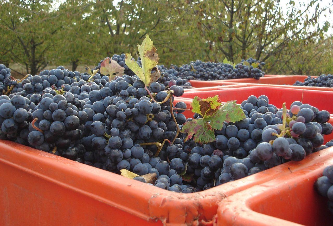 Une production de vin historiquement basse