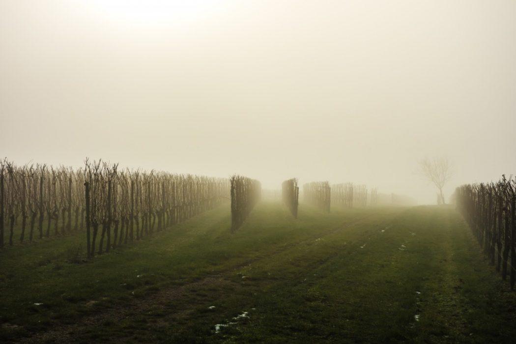 Production vitivinicole mondiale en 2017